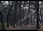 경주 삼릉, 산림 환경연구원, 반곡지 당일여행