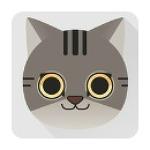 반려묘 고양이 구토의 이유와 해결방법 구토에 좋은 음식