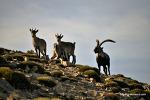 스페인 고산, 인간과 동물의 공존 라이프