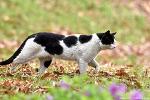 올림픽공원 고양이, 직박구리, 딱따구리, 꿩