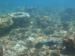 사피섬 스노클링(Sapi Island) @Kotakinabalu