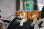 오키나와 헤이와도오리의 고양이 점장