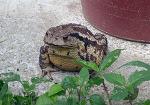 [행복찾기] 생명은 소중하고, 삶은 아름답습니다/농촌의 집은 미물로 가득한 작은 동물원/집에 찾아 온 손님 두꺼비/이 한 장의 사진/죽풍원의 행복찾기프로젝트