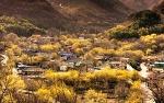 구례산수유꽃축제, 3월 여행지 추천 축제로 구례 갈만한곳