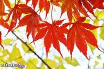 티스토리 블로그 개설 8주년 기념! 티스토리 초대장 배포