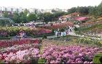 부천 백만송이 장미축제 국내 최대 규모의 장미공원