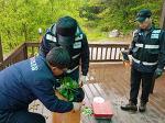 산나물 불법채취 단속