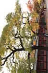 창경궁 늦가을 풍경 | 서울 가볼만한곳