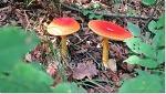 예쁜 빨간색 버섯