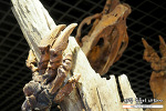 안면도 쥬라기 박물관 공룡 공원... 싸게 즐겁게 다녀오다