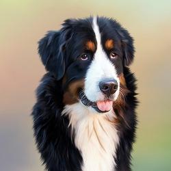 개,고양이들의 생명을 위협하는 기생충-심장사상충 예방 방법 및 치료 방법