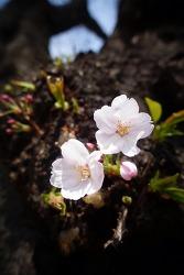 봄. 빛. 꽃.