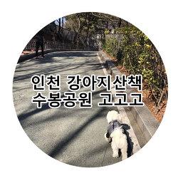 인천강아지산책 가볼만한 수봉공원