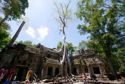 """[캄보디아 여행] 앙코르와트 여행: 타프롬사원(따프롬/Ta Prohm): 툭툭이를 타고 영화 """"툼레이더"""" 의 촬영지로 유명한..."""