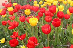 눈이 즐거운 봄나들이~ 봄꽃의 향연속에 힐링하고 왔어요~!