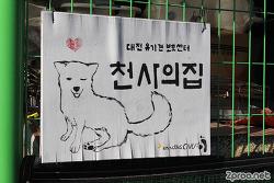 대전 갈마동 유기견 보호센터 사랑쉼터 천사의 집, 봉사활동과 후원이 필요한 곳