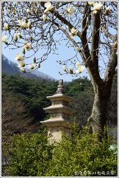 충북 단양 향산리 삼층석탑