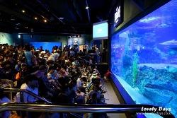 부산 여행: 부산 아쿠아리움(SEA LIFE) - Sea at NIGHT (해저의 세계)