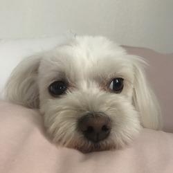 강아지분리불안 증상 훈련방법