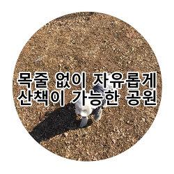 인천부천 강아지산책 여긴 꼭 가야합니다! 상동호수공원