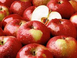 6월 사과 가격 전망 출하 전망은?
