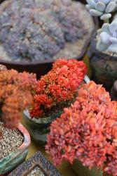 다육식물 겨울 보내기