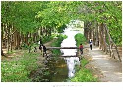 5월 추천출사지/5월가볼만한곳/경주 경상북도산림환경연구원 통나무다리와 메타쉐콰이어숲길~