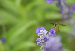 재미있게 생긴 이 곤충의 이름은 뭘까 ?