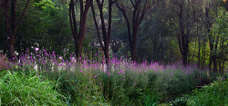 수목원의 아침