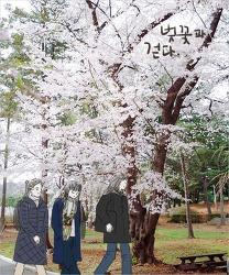국립현충원으로의 벚꽃 산책