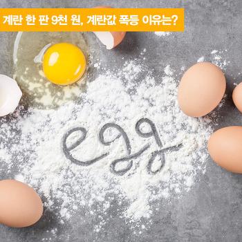 계란 한 판 9천 원, 계란값 폭등 이유는?
