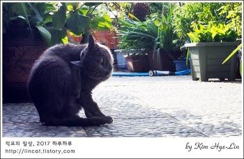 [적묘의 고양이]노묘 남매의 흔한 아침, 고양이 세수했냐옹