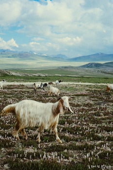 [파키스탄] Deosai National Park