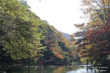 울긋불긋 물들어가는 가을 단풍, 여기는 꼭 가봐야지!