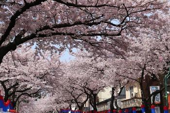 2017년 4월 봄축제