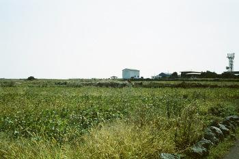 10월, 제주 가파도 청보리밭 풍경