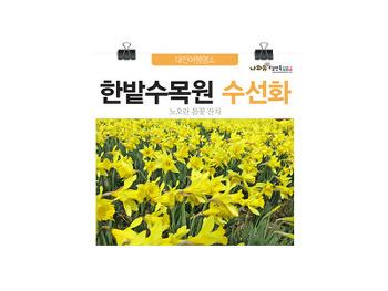 대전봄여행 한밭수목원에 수선화 활짝폈네