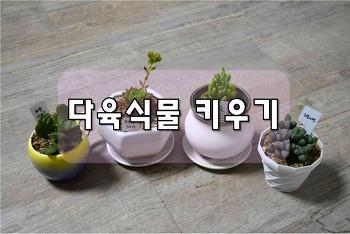 착한 가격의 다육식물 키우기