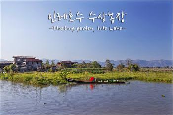 [미얀마 인레호수]인타족의 물위 생활터전 수상농장 쭌묘 / Floating Garden