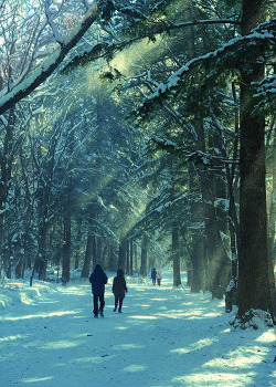 Return to the Winter forest