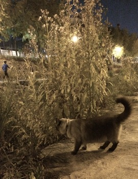 샴비 와 찬이 야간 산책