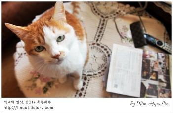 [적묘의 고양이]커피콩을 갈아서,핸드 드립커피,18살 노묘와 함께 즐기기