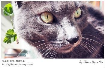 [적묘의 고양이]몽실양은 햇살바라기, 봄날 캣닙잔혹사