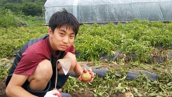 2017-07-06 [무농약 감자] 사세요^^