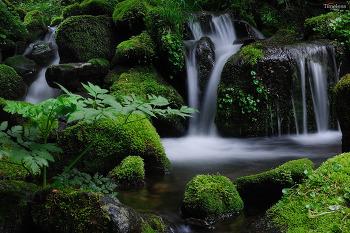 초록의 신비로움