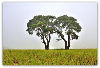 부부 소나무 9ㅡ23