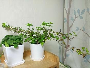 직접 키워 본 생명력 강한 공기정화 식물 2종