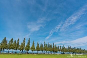 창원 죽동마을 메타세콰이어길, 하늘과 구름이 참 예뻤던 날