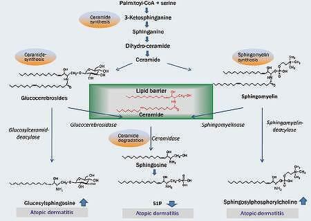 아토피 피부염과 피부지질내 P1P(S1P)의 함량
