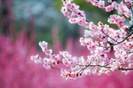 봄빛이 곱다